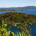 Stewart Island - das Vogel- und Pflanzenparadies
