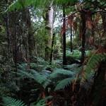 Dicht bewachsener Regenwald