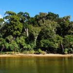Küstenregenwald