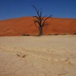 Toter Baum in der Lehmbodensenke Dead Vlei