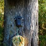 Öffentliches Telefon auf der Insel